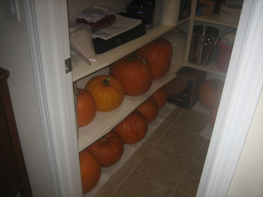 How to store pumpkins - How To Store Pumpkins