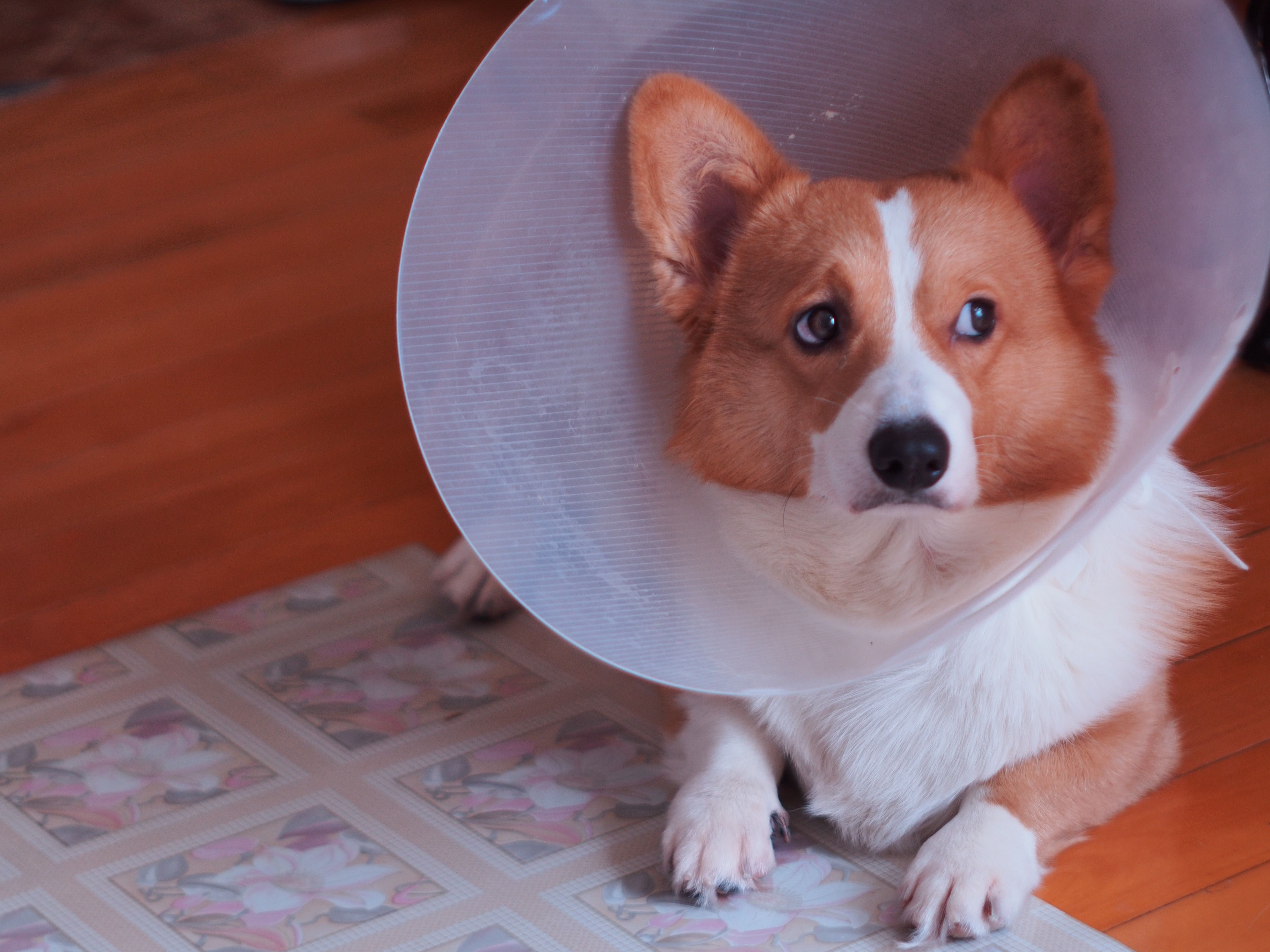 Not too sure about the cone (Xpost from /r/ConeOfShame