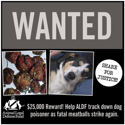25 000 Reward Help Aldf Track Down Dog Poisoner As Fatal Meatballs Strike Again Animal Legal Defense Fund Dogs Dog Owners Animals