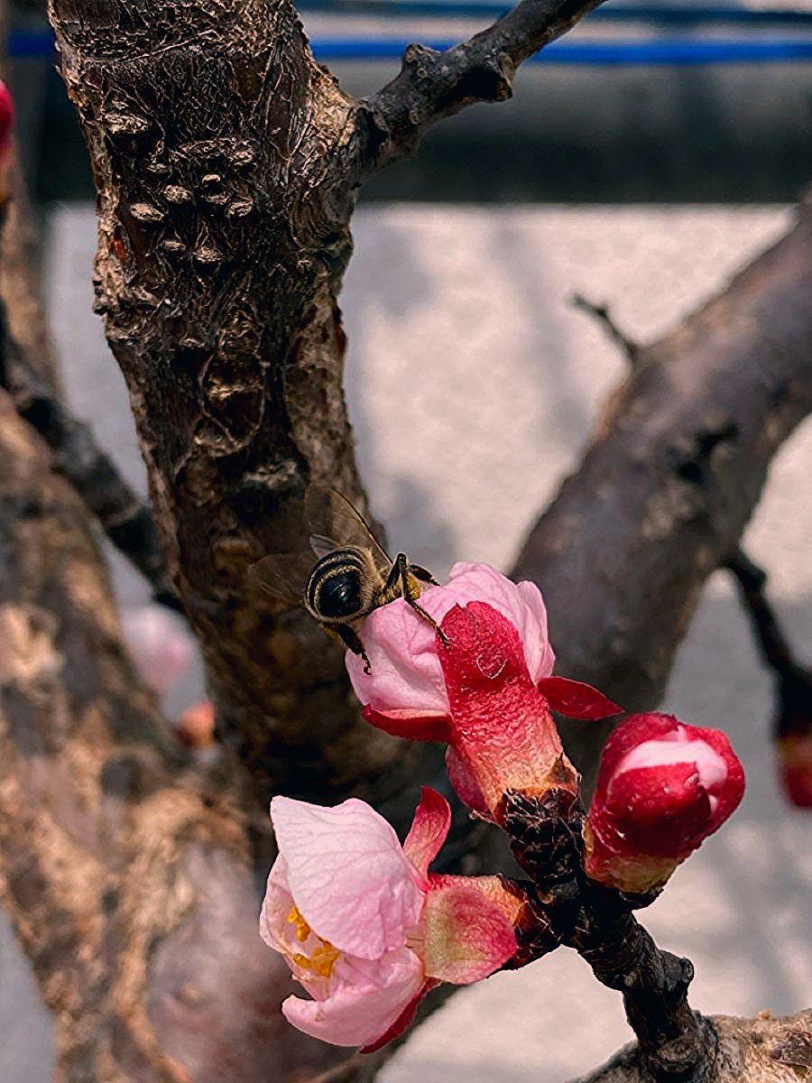 Photo of jetzt Blüten – später Früchte