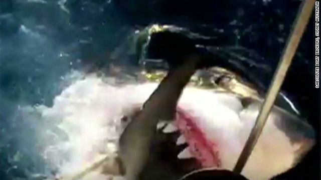 Fishermen caught video of an 18-foot great white shark next