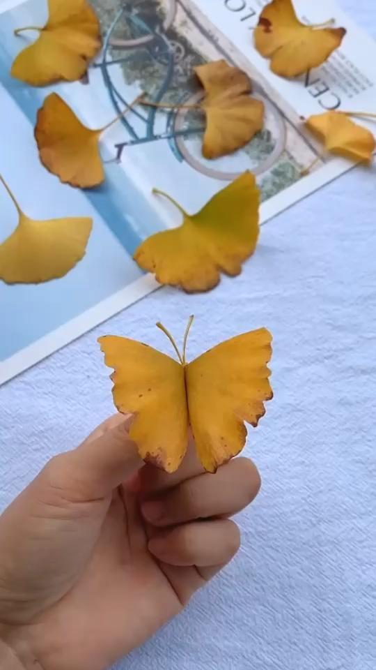 DIY ginkgo leaf butterfly.