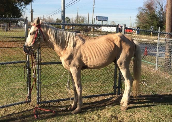 On Horse Nation Houston Tx Animal Neglect On The Rise Horses