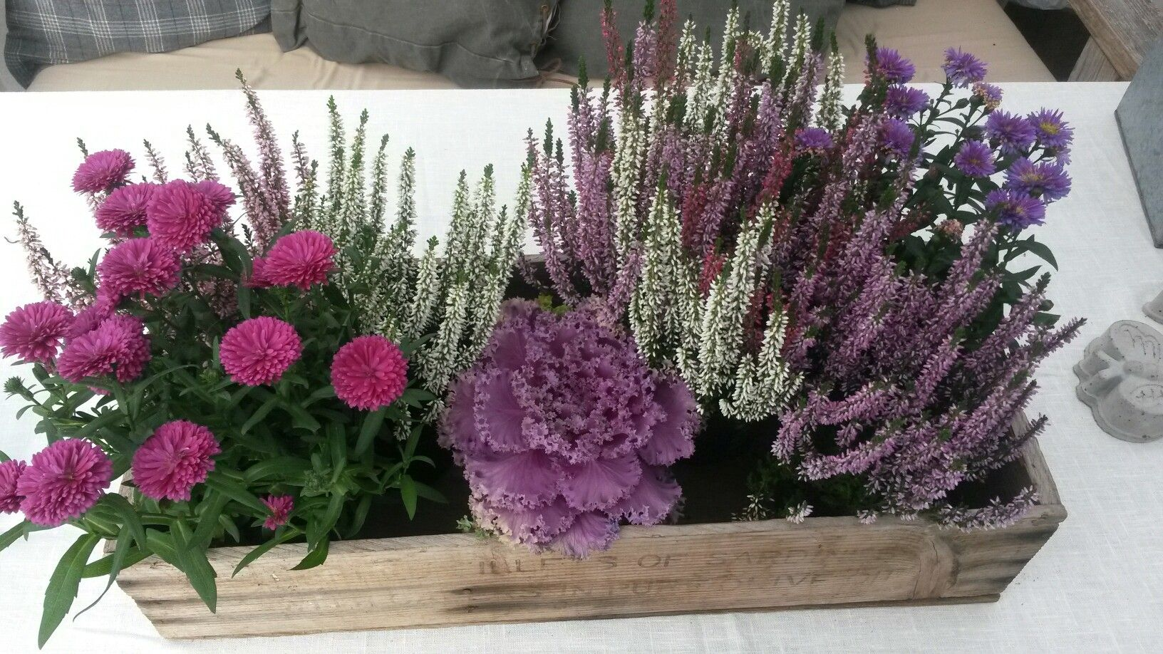 Pin By Gabriela On Utomhus Container Flowers Fall Flowers Flower Pots Outdoor
