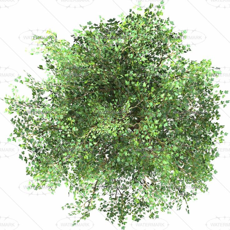 Trees Top View Google Sogning Trees Top View Tree Photoshop