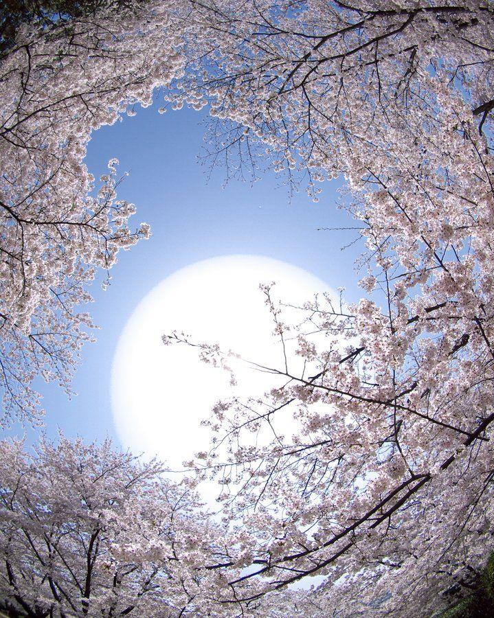 весенняя луна картинки история