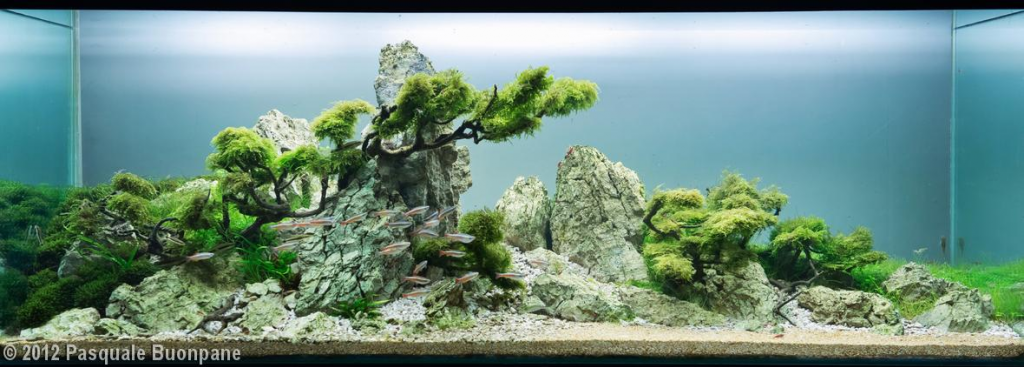 2012 aga aquascaping contest entry 351 350l aquatic garden where the wind blows aquascapes - Design aquasacpe ...