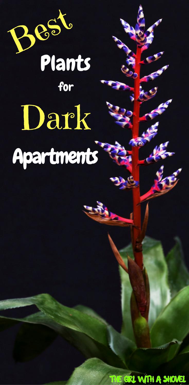 Best Plants for Dark Apartments | Indoor plants low light ...