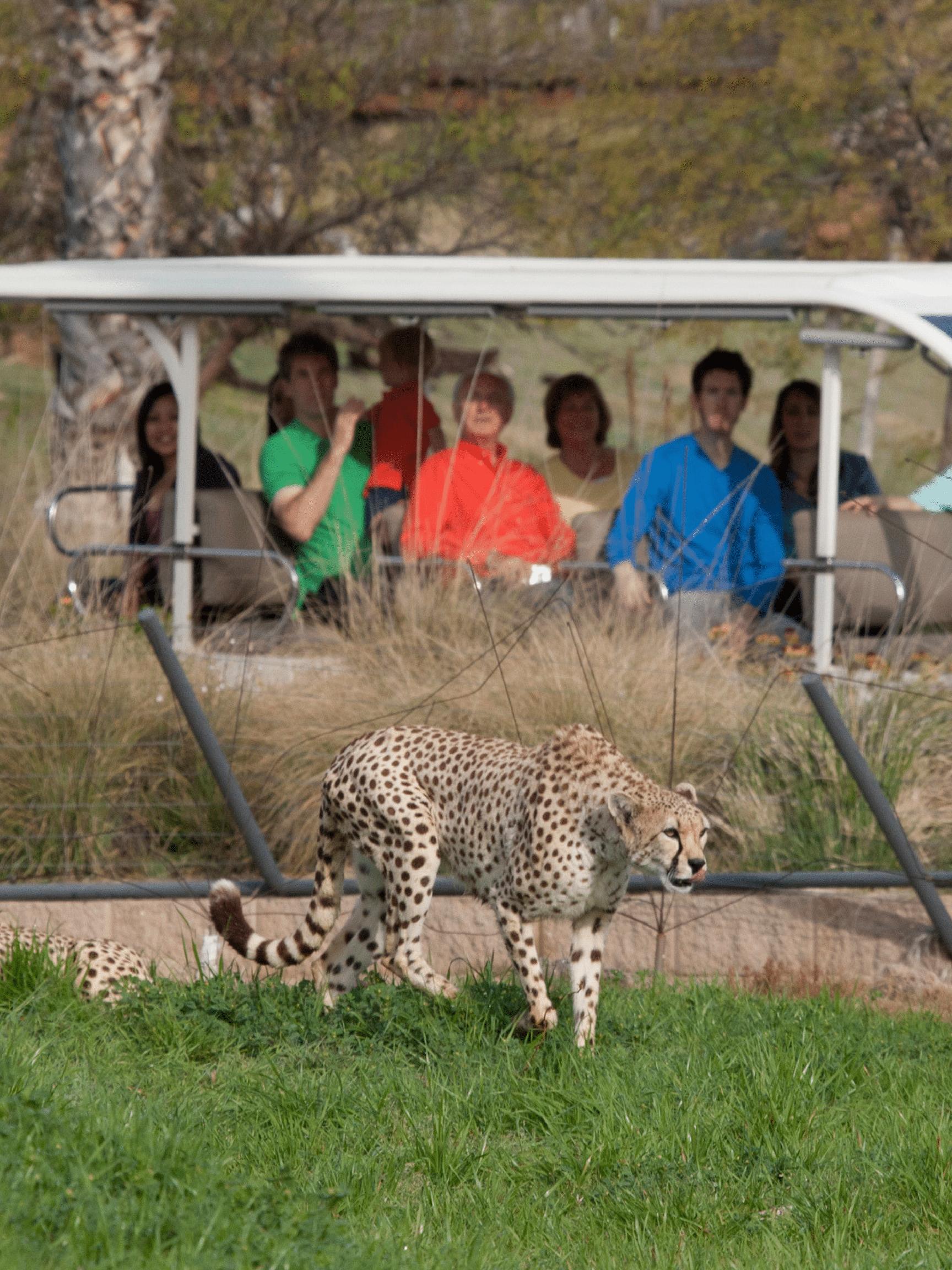 San Diego Zoo Safari Park Detailed Guide 2020 San Diego Safari