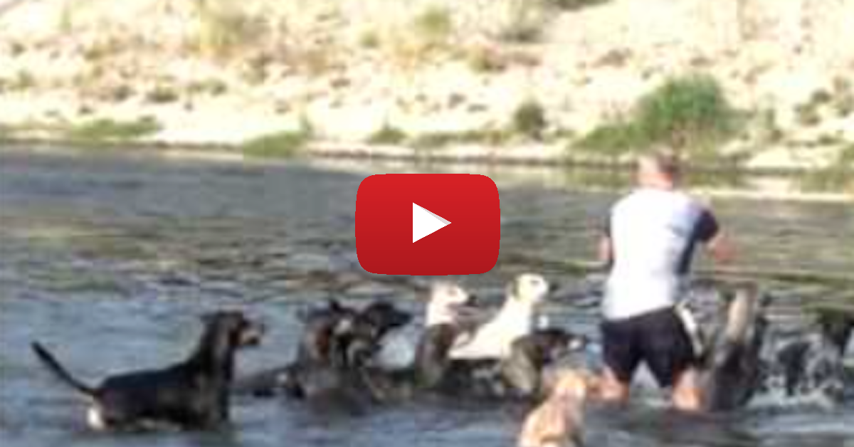 Can You Believe What This Guy Does With His 16 Dogs?!
