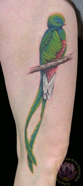 c366df5f8e868 Quetzal Bird. The National bird of Guatemala. I want this as a tattoo,  it'll look beautiful with my father's name in memory. He used to always  draw this ...