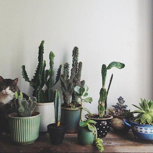 Die Katze Findet Es Eine Angenehme Umgebung Jeder Liebt Pflanzen