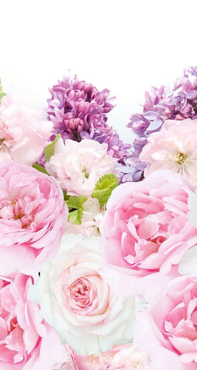 Nature Wallpaper Iphone Flowers Cvetochnye Fony Fioletovye Piony