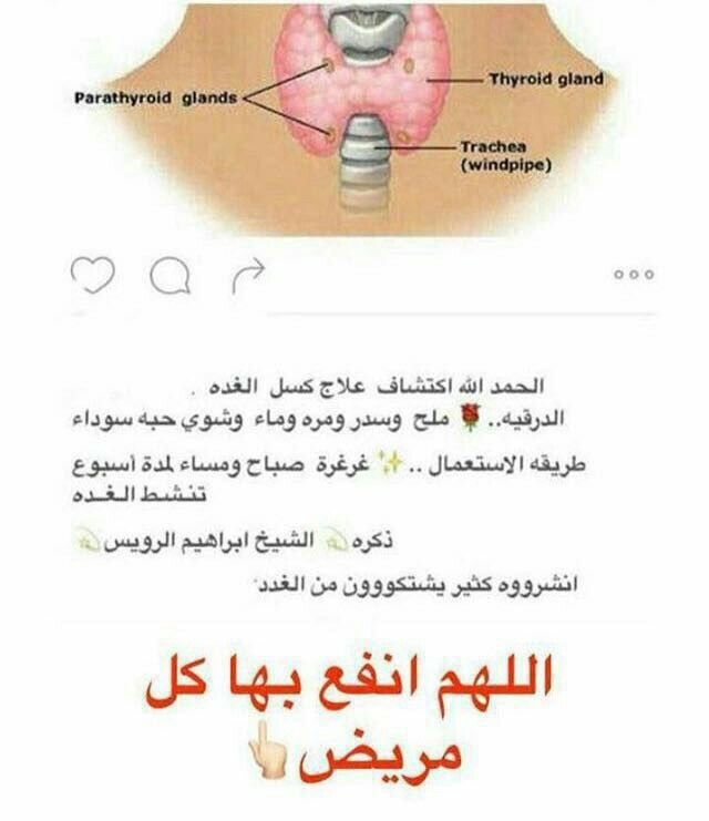 Pin By Chamsdine Chams On معلومة Glands Thyroid Gland