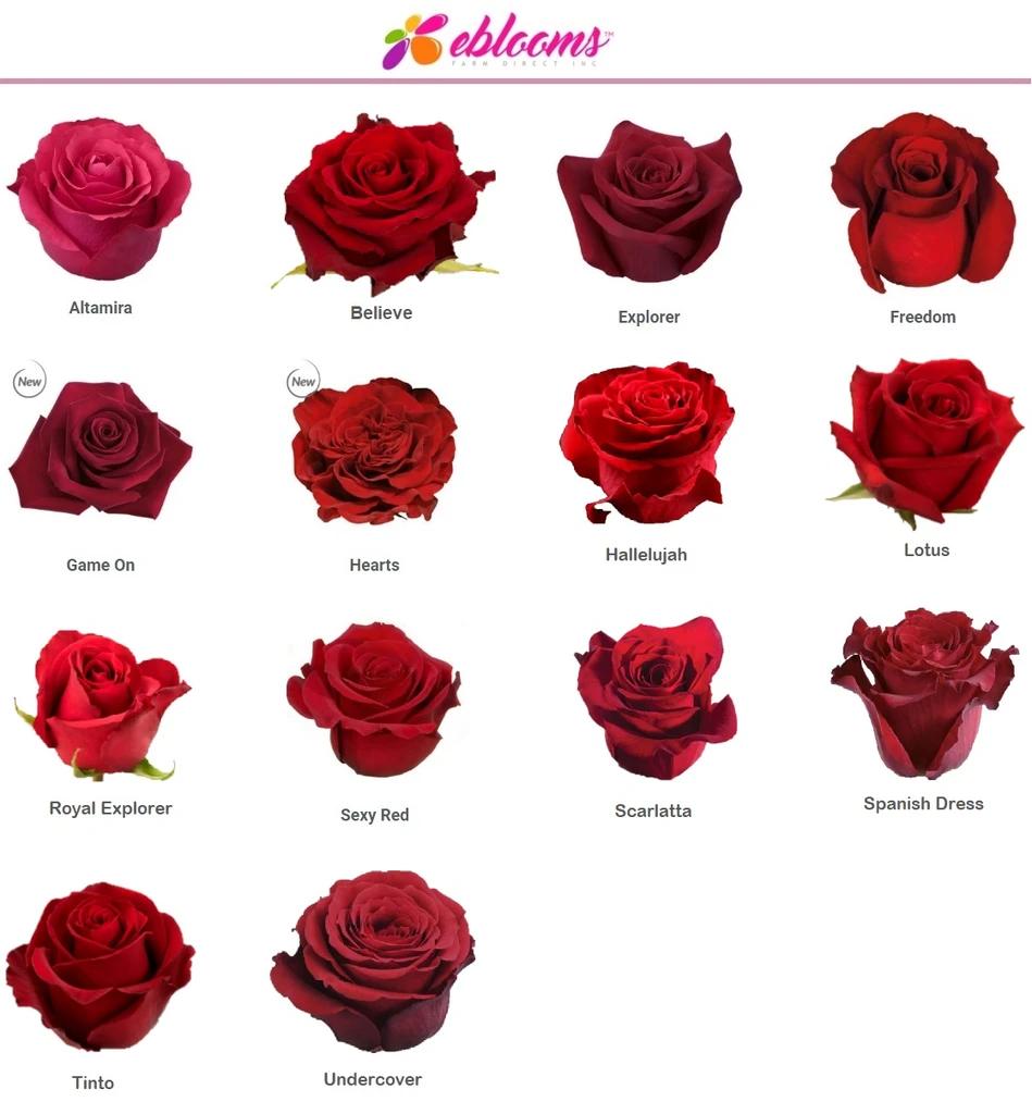 Altamira Red Rose Variety In 2020 Rose Varieties Red Roses Bulk Flowers Online
