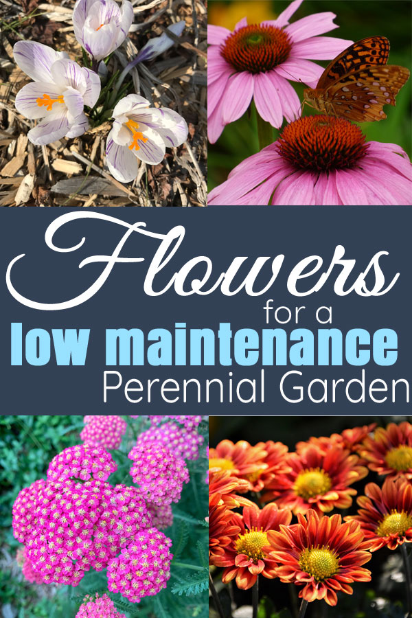 Flowers An All Season And Low Maintenance Perennial Flower Bed Day To Day Adventur Garden Flowers Perennials Low Maintenance Flower Garden Flowers Perennials