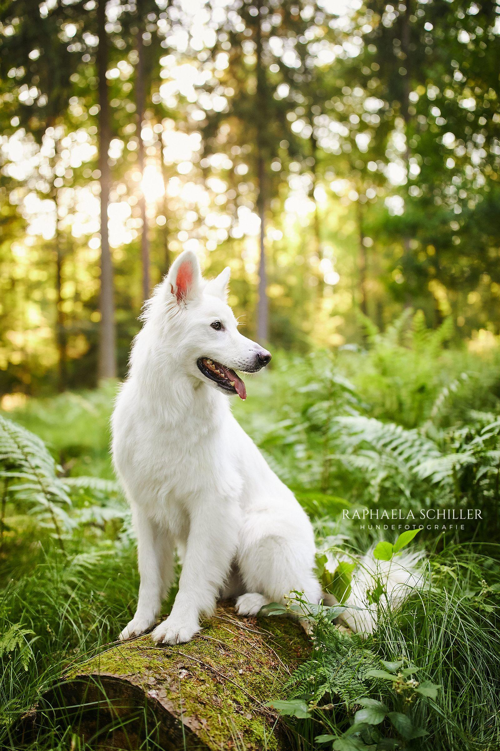 Pin Von Arizona Auf Wundervolle 4 Pfoten Hundefotografie Hunde Hunde Fotos