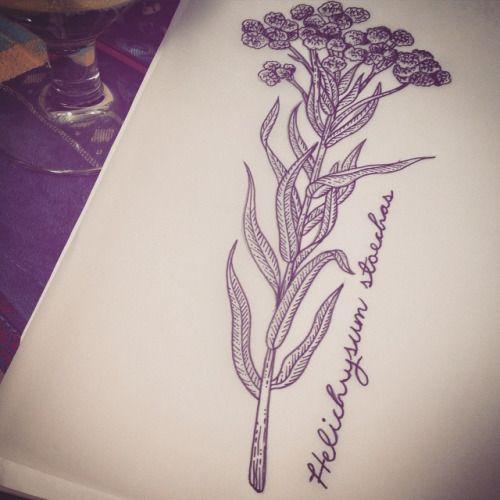 Helichrysum stoechas for Marion #tattoo #tattooart #tattoos #tattoodesign #illustration #flowers #latin #blackworkers #blacktattooart #blacktattoo #etchingtattoo #linework #dotwork #dotworker