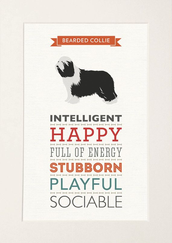 Bearded Collie Dog Breed Traits Print Great Gift For Bearded