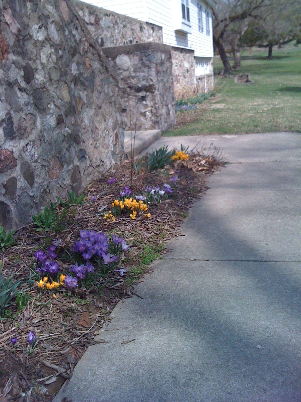 early spring bulbs Deer resistant flowers, Flower garden