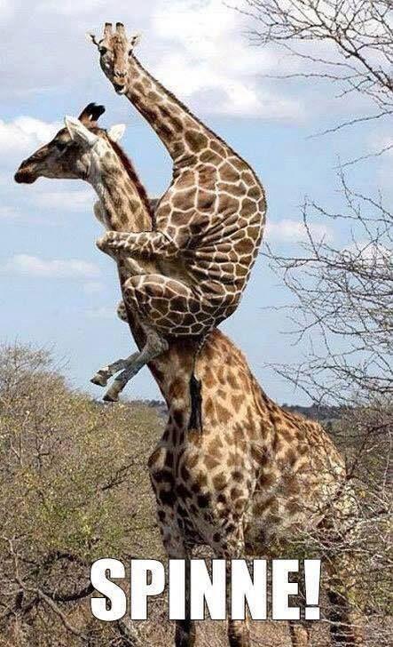 Photo of BinMitDabei.com – # funny-animals   Tienda de comedia