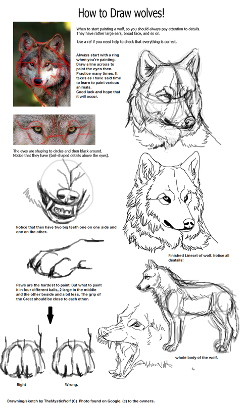 Picture Canines Pinterest Draw Wolf And Animal