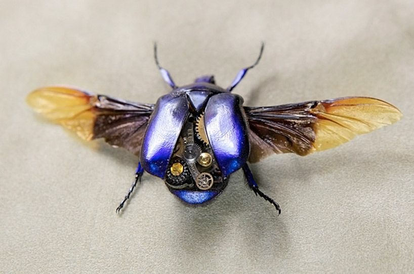 robotic steampunk insects by lindsey bessanon