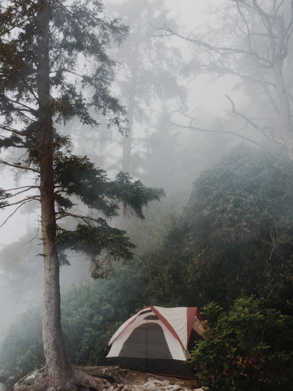 Tent Foggy Forest Camping Outdoors Adventure Mountaincampingplaces Outdoors Adventure Camping Inspiration Outdoor Hd wallpaper tent camping forest fog