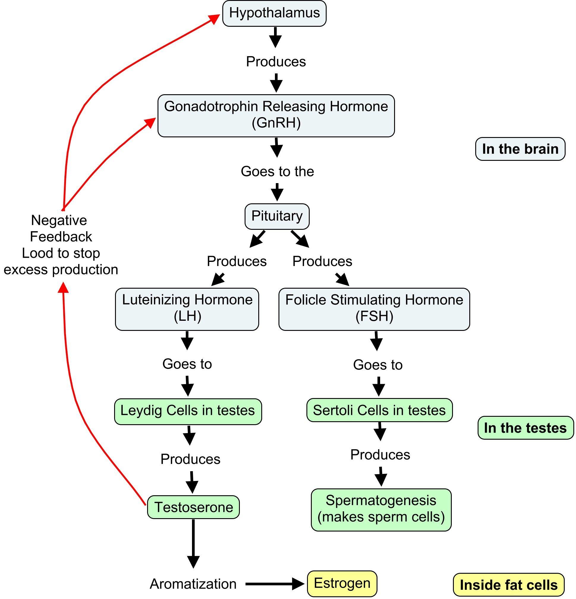 propranolol dosage