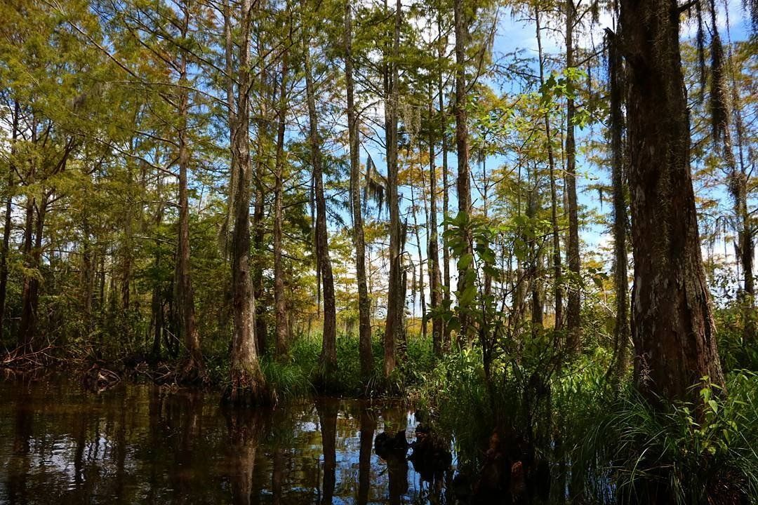Holiday Louisiana Staycation Swamp tours, Staycation