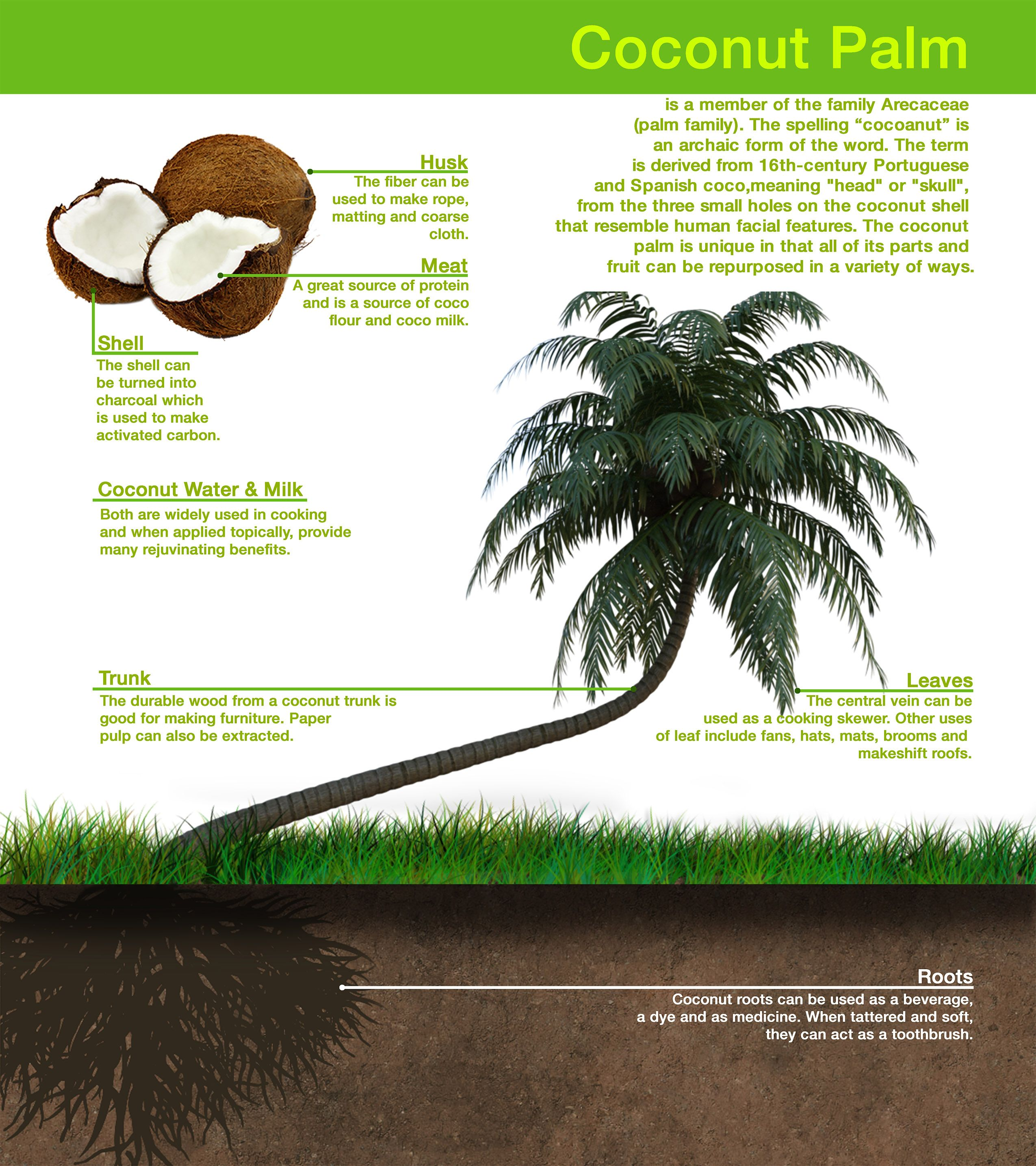 In Addition To The Tree S Natural Grace Every Part Of The Lovely Coconut Tree Has A Use Plant Leaves Coconut Palm Coconut Shell