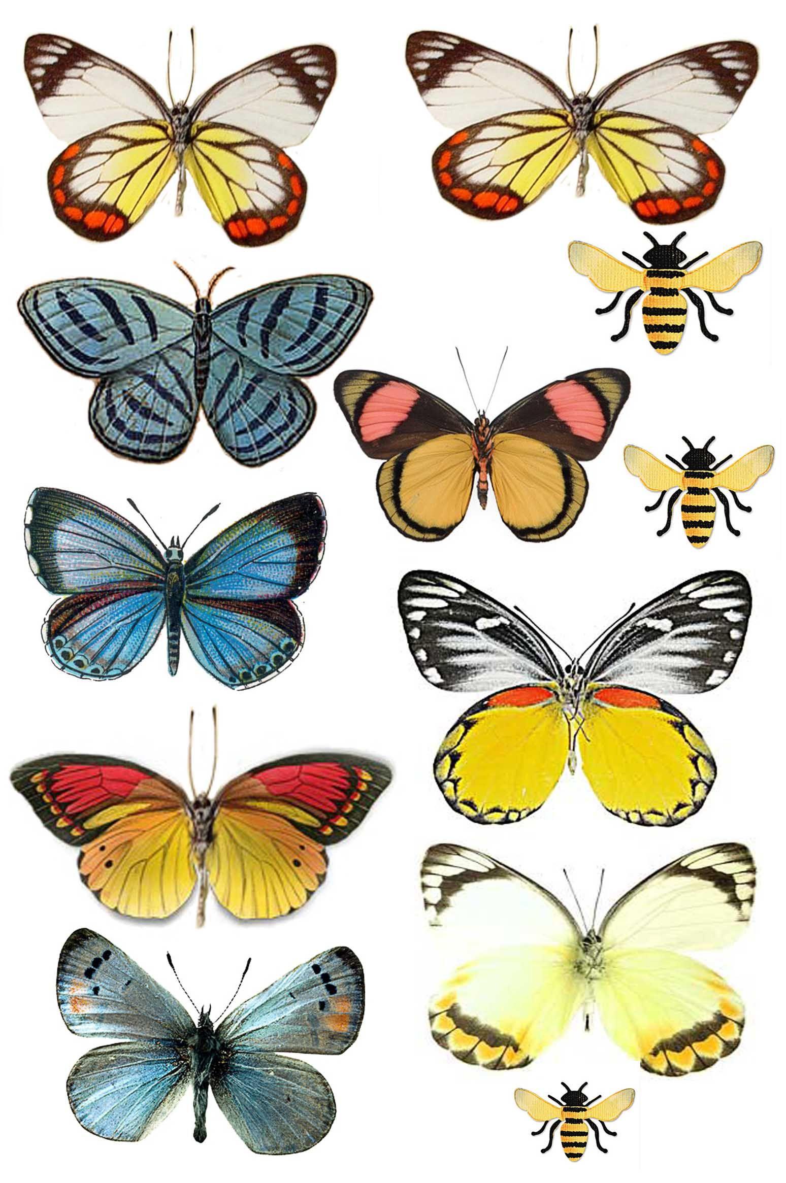 Swirlydoos: Forums / Images & Graphics / Butterflies | Printables ...