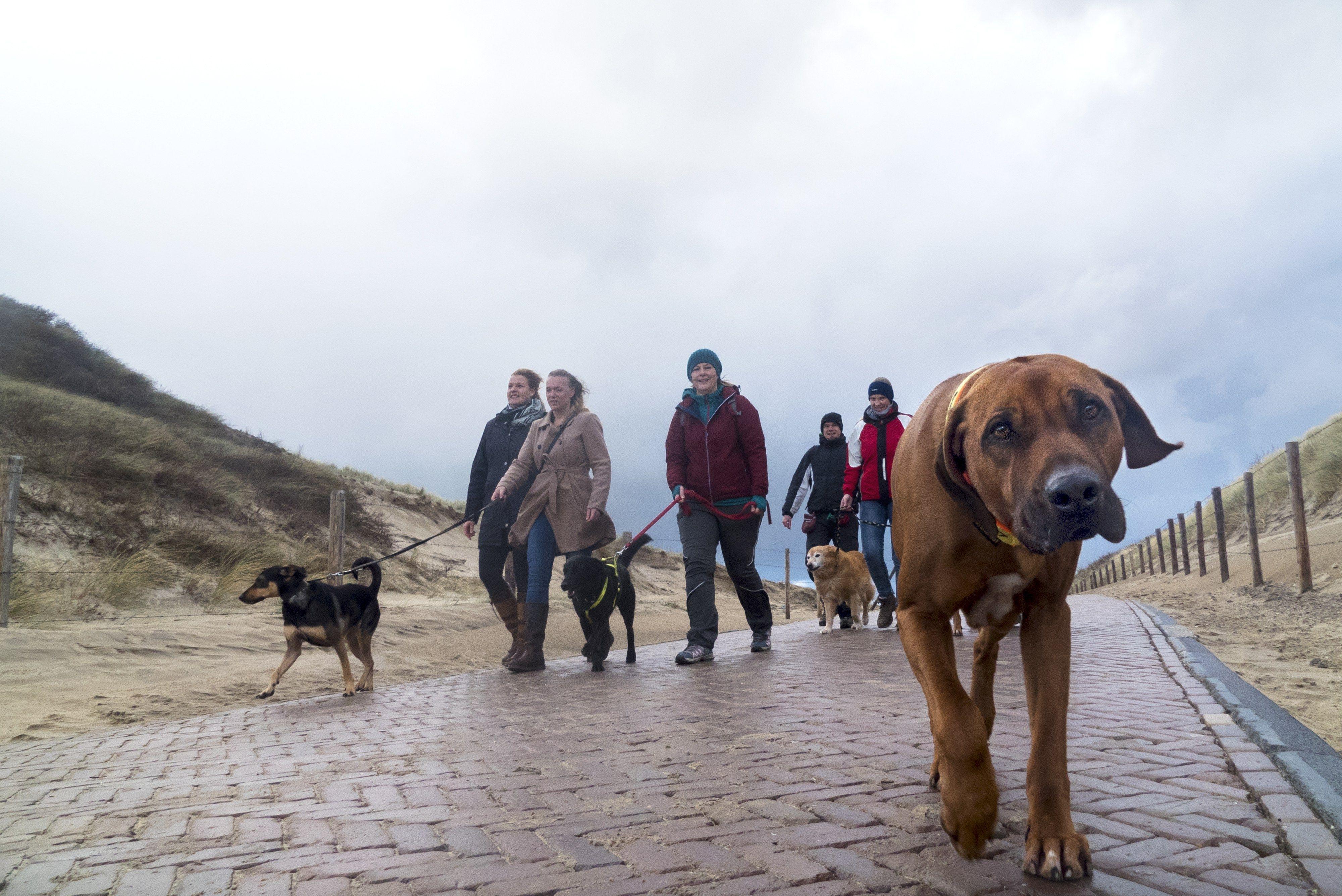 Hundestrand Noordwijk Ohne Leine Am Kilometerweiten Strand In Holland Holland Strand Hundestrand Und Hunde