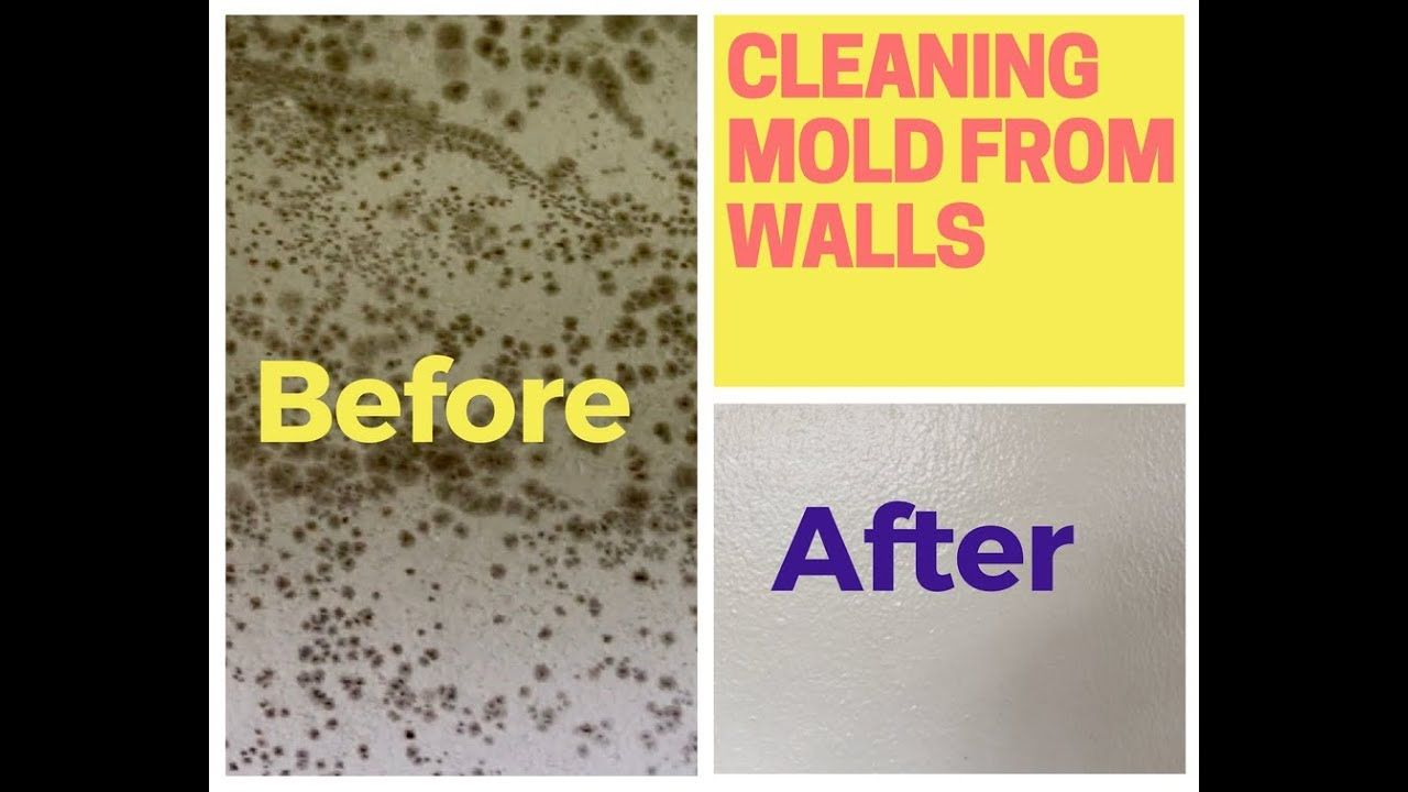 How To Remove Mold From Walls (Drywall) YouTube Remove