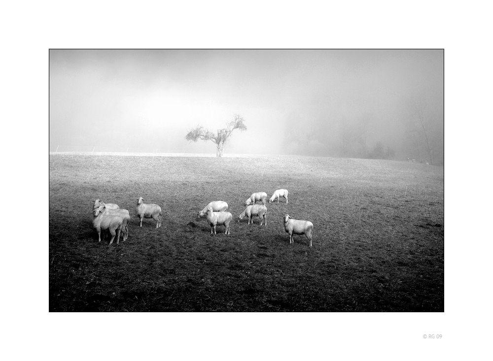 Bei Der Verwendung Des Schafzeichnungsfilters Ist Vorsicht Geboten Da Das Bild Sonst Zu Schaf Wird Canon Eos Schafrassen Schafe Zeichnungen