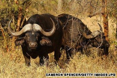 Africas Best Safari Parks Park Africa And Uganda - 10 best safaris in africa