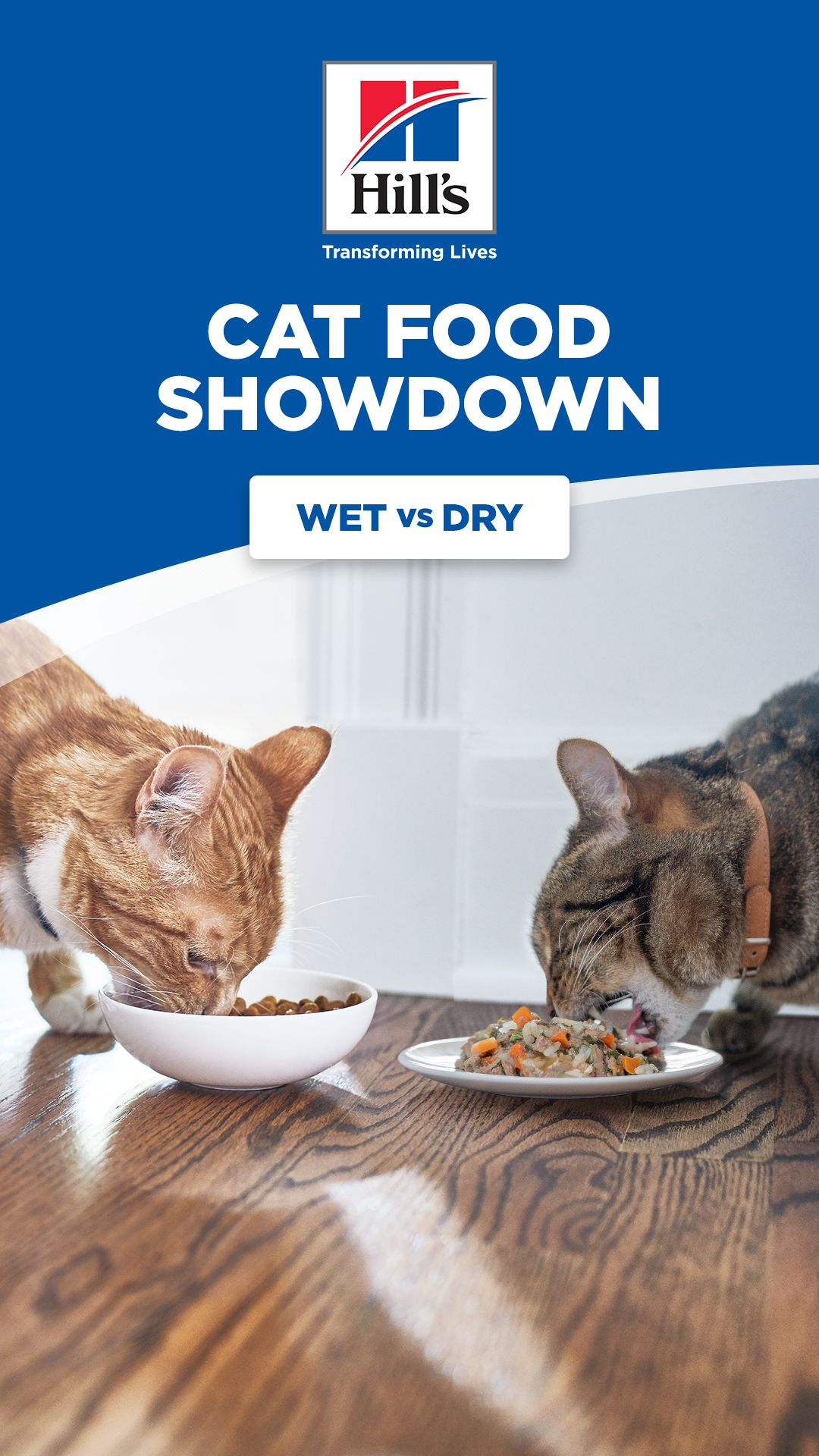Should You Buy Wet Or Dry Cat Food In 2020 Dry Cat Food Cats Cat Food