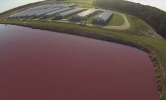 A Drone Flew Over A Pig Farm To Discover It's Not Really A