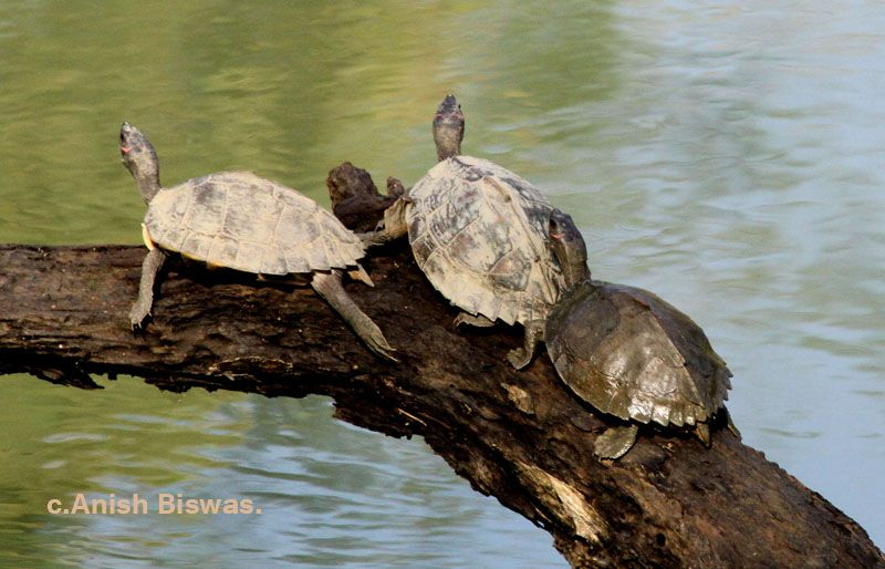 Kawaii Turtle Animals And Pets Animals