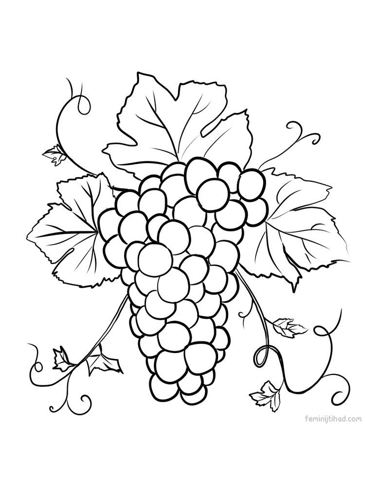 Grape Coloring Page Free Download Fruit Coloring Pages Coloring Pages Coloring Pages To Print
