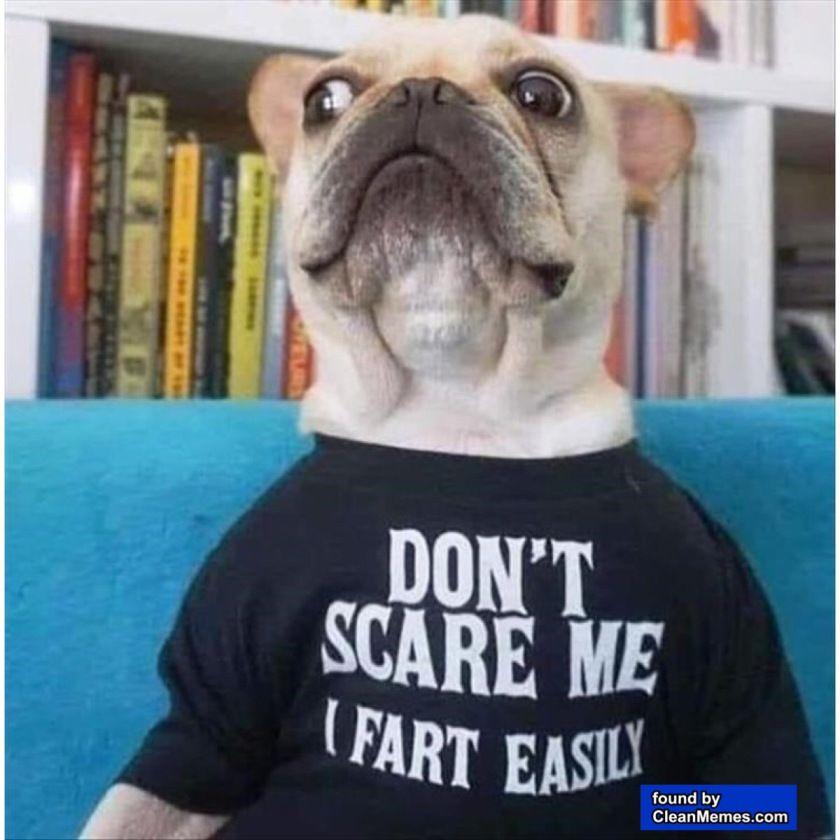 Funny French Bulldog Memes Humor Divertido Sobre Animales Imagenes Divertidas De Animales Animales Bonitos