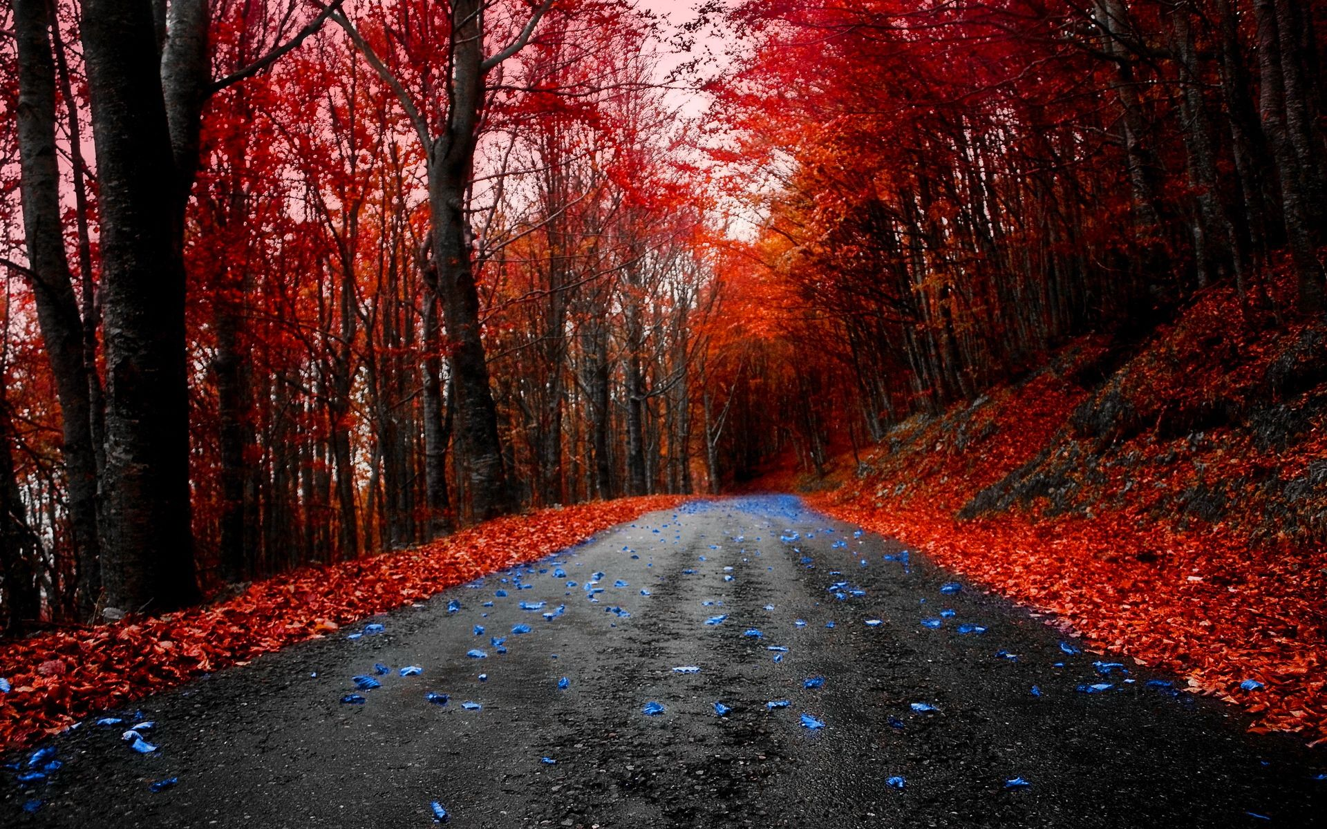 HD Red Maple Road Wallpaper Download Free 90000 Red