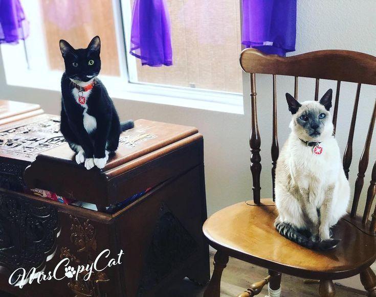 #cats  #gatos  #starringcats  #catstatues  #catsofinstagram  #catoftheday  #cats_of_instagram  #fightingcats  #catgram  #tuxedocat  #tuxedokitten  #kittengram  #siamesecat  #siamese  #kittycats  #etsypets  #mrscopycat  #etsyhandmade  #etsyartist  #etsyhunter #Caterty... #haha Statues of Caterty... haha