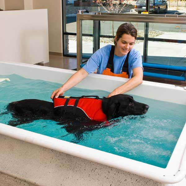 Hydrotherapy Means Water Healing In Greek And Dogs Can Benefit In The Same Way Humans Do Dog Pool Hydrotherapy Dog Backyard