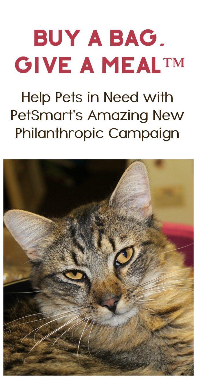 Petsmart Celebrates 30 Years With Their Biggest Philanthropic Campaign Ever Petsmart Pet Hacks Pet Care Tips