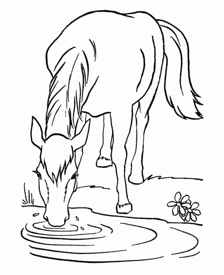 Horse drinking water from the river coloring pages Animal Coloring