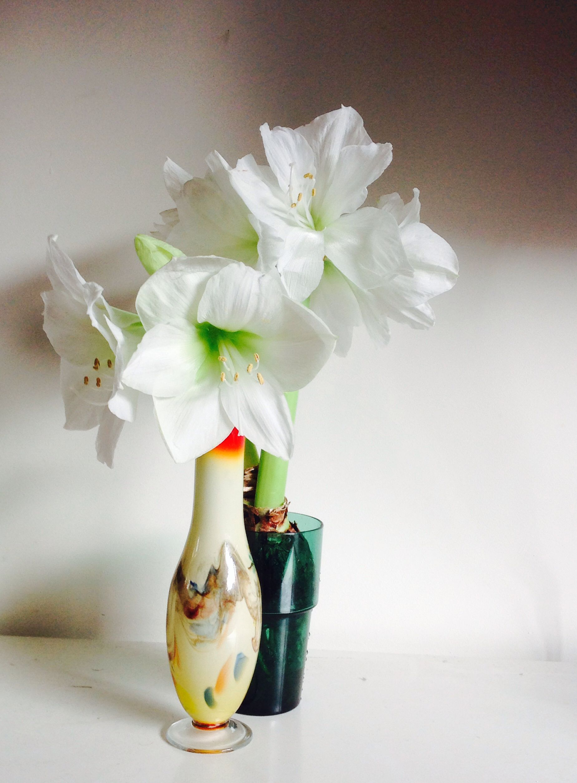 Amaryllis Bulb Fits In Ikea Glass Behind The Vase With One Flower That Broke Off