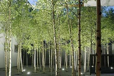 Tree In Courtyard Google Search Planting Pinterest