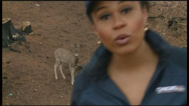 While 9NEWS reporter Meagan Fitzgerald was doing a live shot
