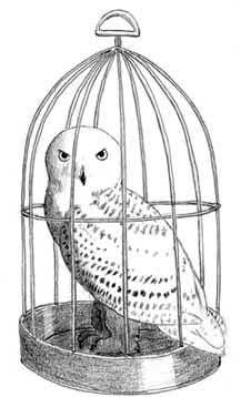 How To Draw Hedwig Harry Potteru2019s Snowy Owl | Art Ideas | Pinterest | Hedwig Harry Potter ...